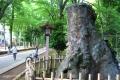 大宮氷川神社(参道)