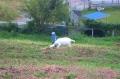 ヤギと遊ぶ園児