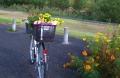自転車に積まれた花