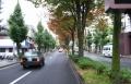 晩秋の北白川通り