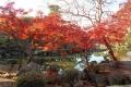 印月池の紅葉