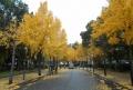 大阪城公園②