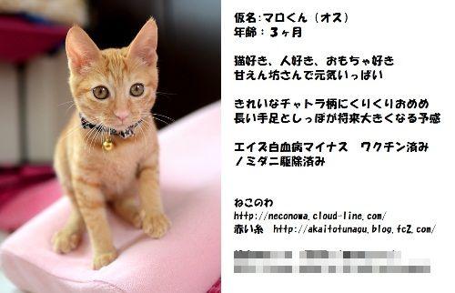 譲渡会マロ - コピー
