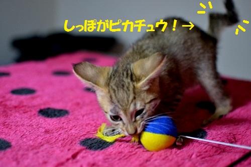 DSC_0514_20121224025425.jpg