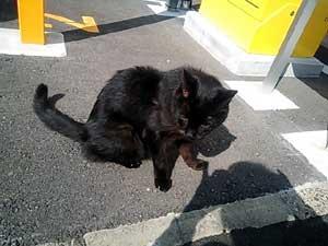行きずりの黒猫