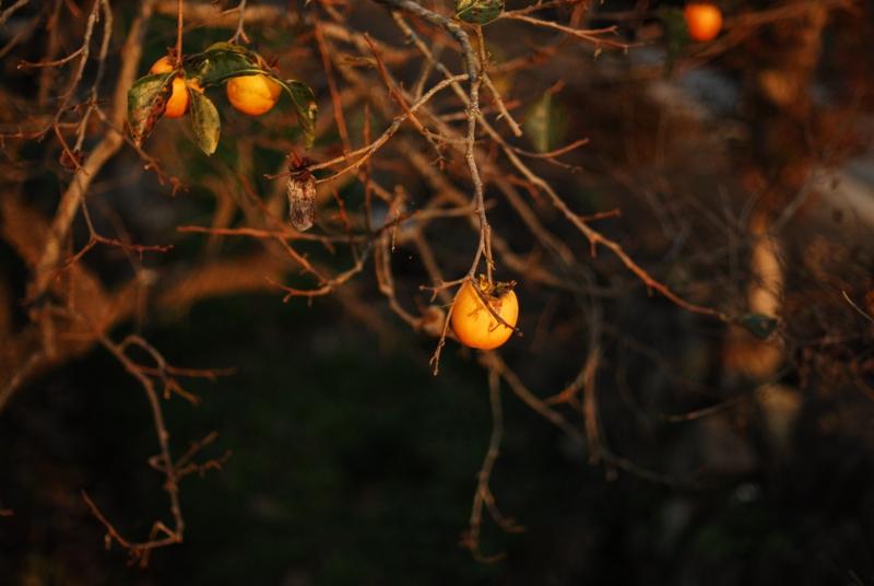 秋探しポタ