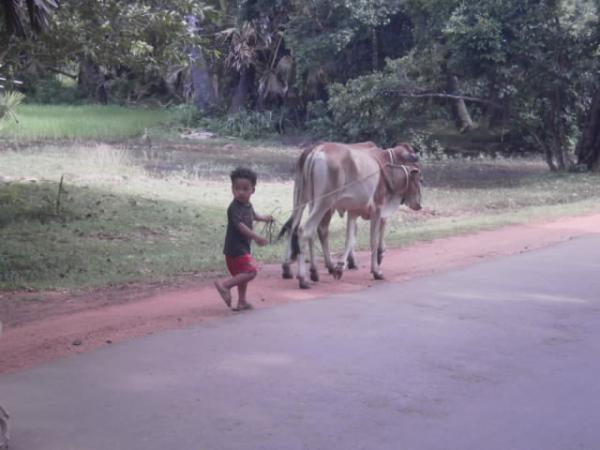 牛の世話する幼子