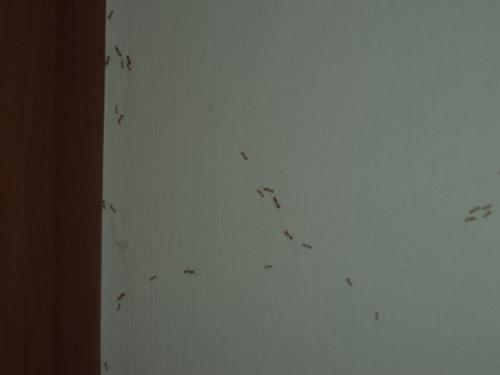アリの行進2