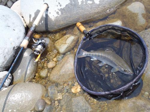 6月4日の釣り
