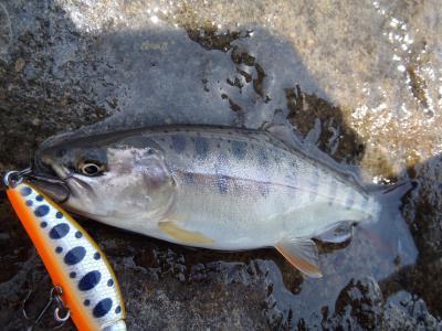 8月3日の釣り
