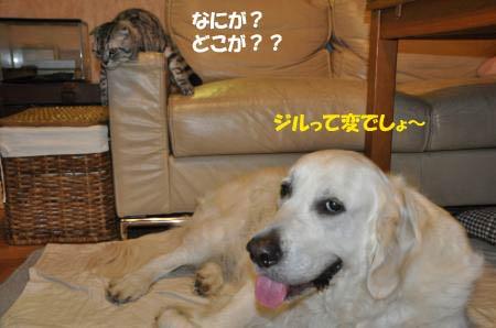 DSC_0652_convert_20120620210917.jpg