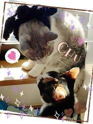 ぐみ 猫さん2匹