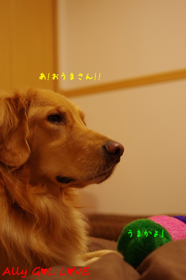 IMGP1438.jpg