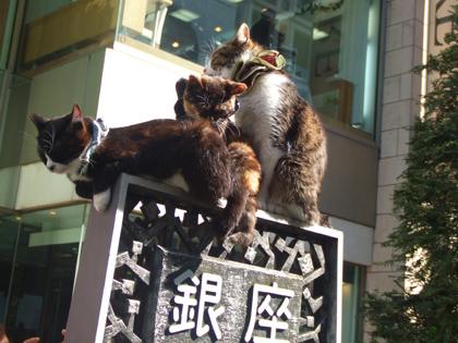 またまた・・銀座のシュシュ猫