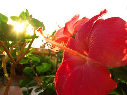 hawaii16.jpg