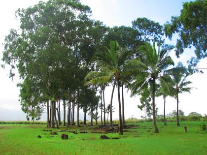 ハワイ パワースポット『クカニロコ』