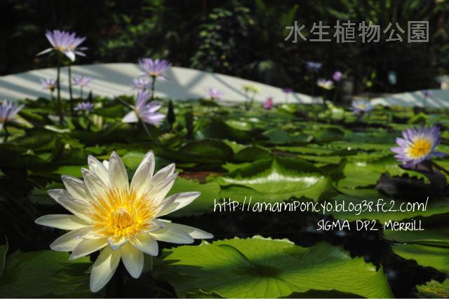 SDIM0177-001.jpg