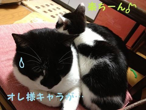 006_20130123205507.jpg
