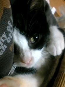 猫まろのブログ-091122_2131~01.JPG
