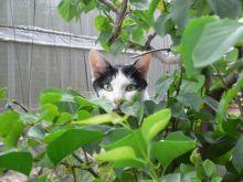 猫にSweets-お梅