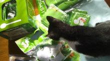 猫にSweets-LISMOグッズ_0001_0001_0001.jpg