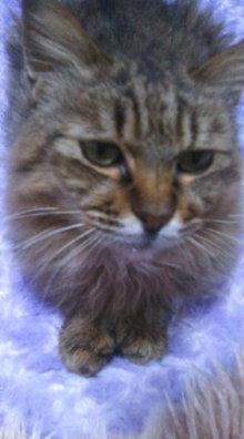 猫にSweets-SN3M0001_0001.jpg