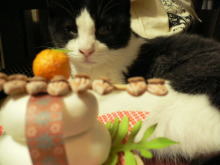 猫にSweets-カタメ