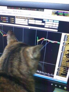 猫にSweets-100104_1824~01.jpg