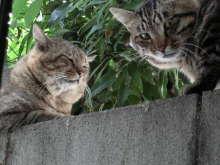 猫にSweets-たろうとおおきいちゃん
