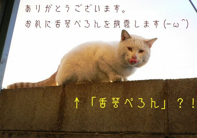 猫にSweets-しろちゃ