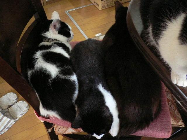 猫にSweets-特盛り