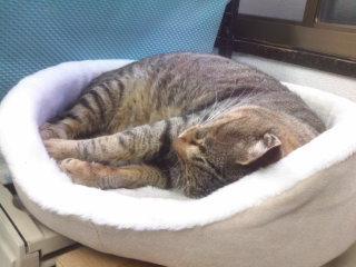 猫にSweets-100202_1653~01.jpg