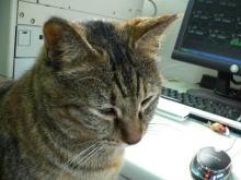 猫にSweets-にゃんこ先生