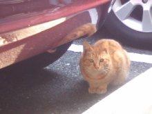 猫にSweets-SN3M0005.jpg