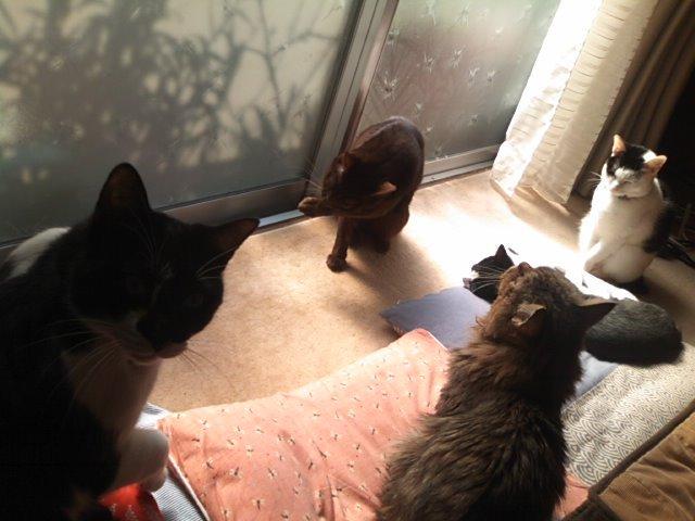 猫にSweets-全員集合