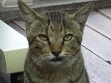 猫にSweets-にいちゃん