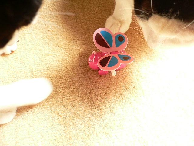 猫にSweets-虫のおもちゃ