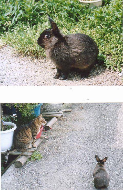 猫にSweets-うさお