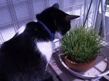 猫にSweets-ねこ草
