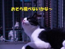 猫にSweets-はと