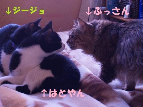 猫にSweets-ふっさんとはと