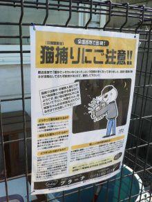 猫にSweets-猫捕りポスター