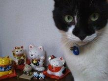 猫にSweets-SN3M0038.jpg