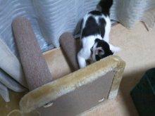 猫にSweets-SN3M0063.jpg