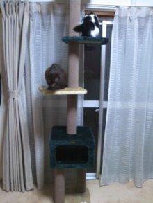 猫にSweets-100420_1933~02.jpg