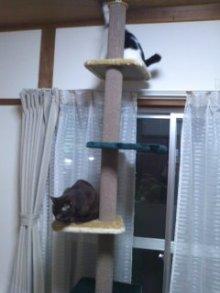 猫にSweets-100420_1934~01.jpg
