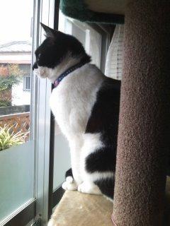 猫にSweets-100424_1058~01.jpg