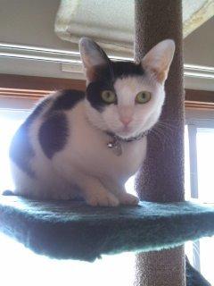 猫にSweets-100424_1059~01.jpg