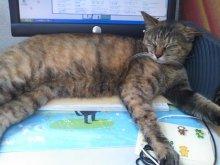 猫にSweets-SN3M0078.jpg