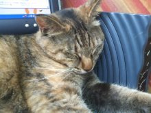 猫にSweets-SN3M0079.jpg